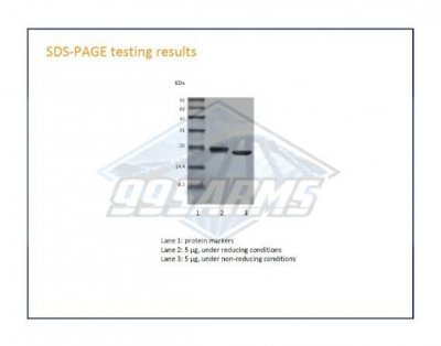 Human Growth Hormone SDS Page